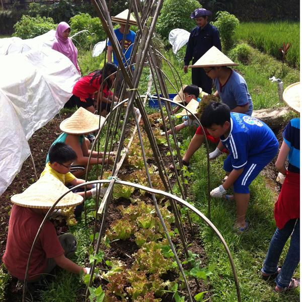 Berlibur Sambil Belajar Bertani Organik