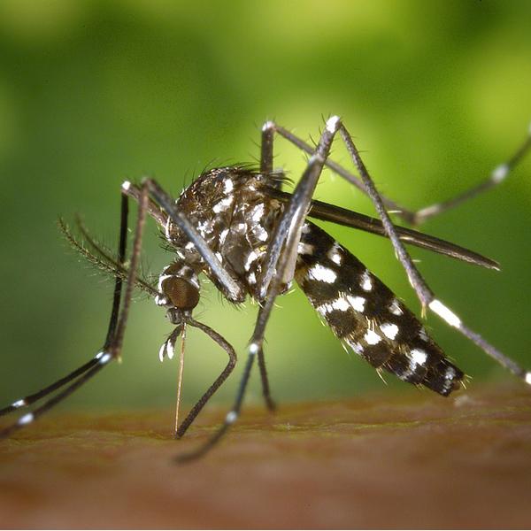 Cegah Virus Zika Pada Ibu Hamil