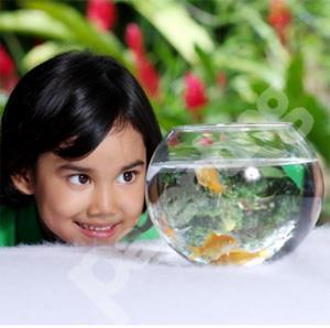 Tip Sebelum Anak Pelihara Ikan
